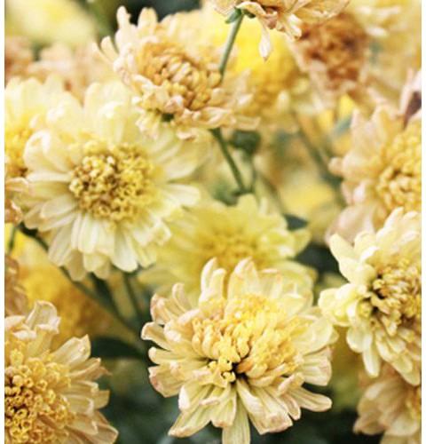 Для цветов